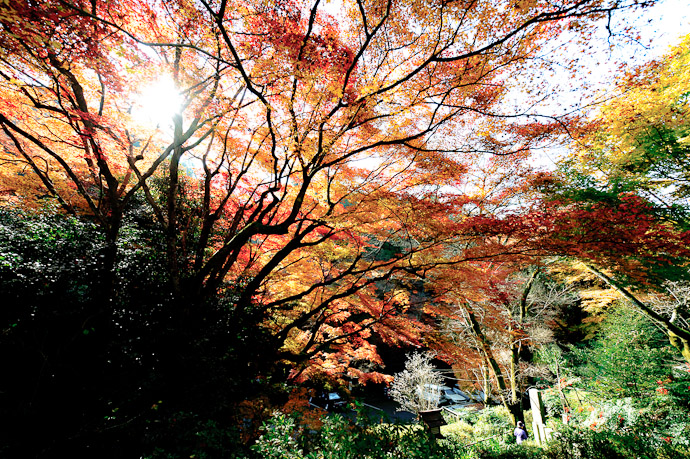 "A Little Over-Exposure works out well.... sometimes from last autumn's outing that produced "" Thatched Roofs and Colored Canopies at the Himukai Shrine, Kyoto Japan "" -- Copyright 2009 Jeffrey Friedl, http://regex.info/blog/"
