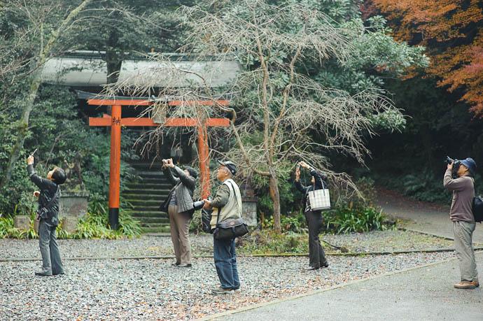 Other Aims -- Himukai Shrine -- Kyoto, Japan -- Copyright 2009 Jeffrey Friedl, http://regex.info/blog/