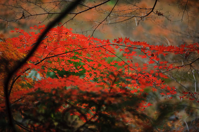 Just. Too. Vivid. -- Kyoto, Japan -- Copyright 2009 Jeffrey Friedl, http://regex.info/blog/