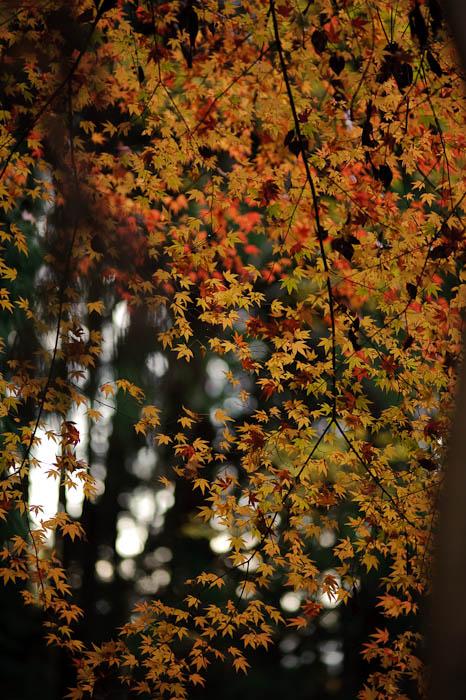 n1392() -- Nishimura Stone Lantern workworkshopshop and garden -- Kyoto, Japan -- Copyright 2009 Jeffrey Friedl, http://regex.info/blog/