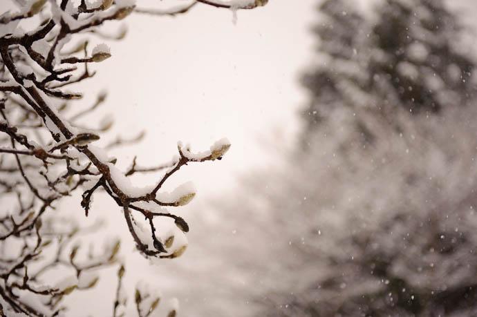 Ice Buds are Blooming -- Nanto, Toyama, Japan -- Copyright 2010 Jeffrey Friedl, http://regex.info/blog/