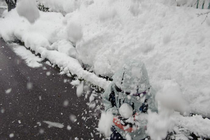 Protecting his baby snowball pet -- Tonami, Toyama, Japan -- Copyright 2010 Jeffrey Friedl, http://regex.info/blog/