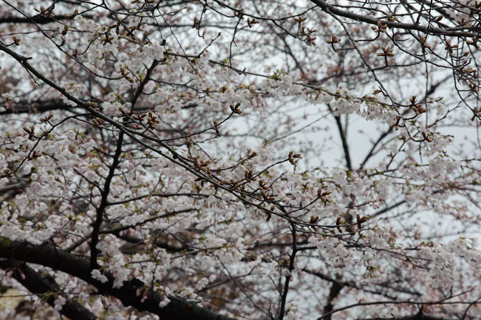 Kyoto, Japan -- Copyright 2010 Jeffrey Friedl, http://regex.info/blog/