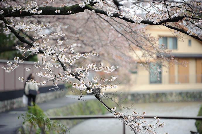 Cherry-Blossom Season 2010 Just Starting Kyoto, Japan -- Copyright 2010 Jeffrey Friedl, http://regex.info/blog/