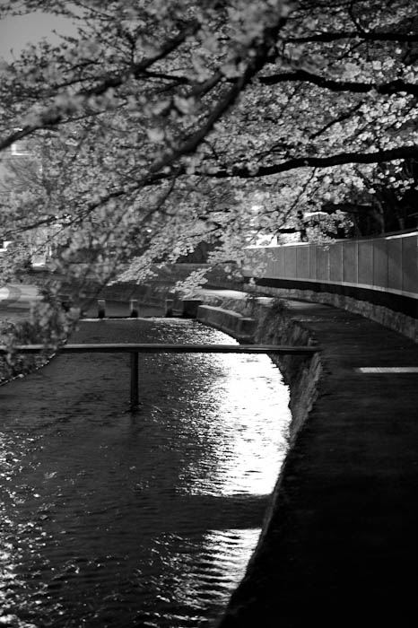 Cherry Blossoms over the Shirakawa River Kyoto, Japan -- Copyright 2010 Jeffrey Friedl, http://regex.info/blog/
