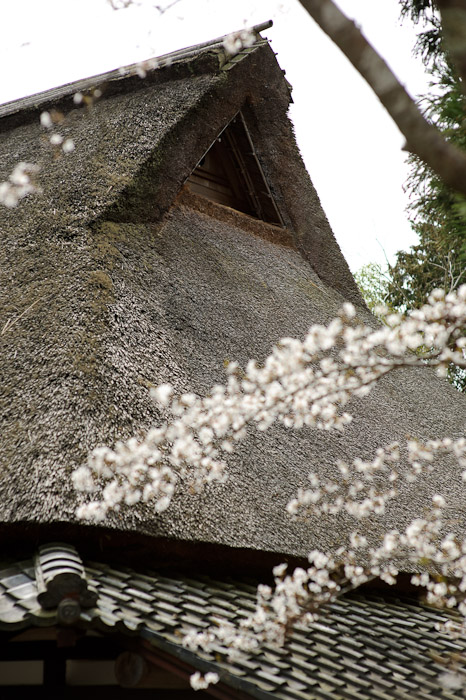 White Blossoms and Thatched Roof -- Sunainosato -- Otsu, Shiga, Japan -- Copyright 2010 Jeffrey Friedl, http://regex.info/blog/