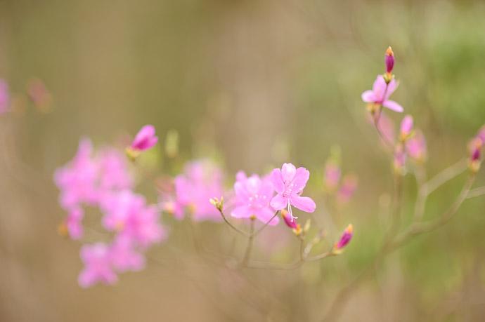 Random Pretty Flowers -- Sunainosato -- Otsu, Shiga, Japan -- Copyright 2010 Jeffrey Friedl, http://regex.info/blog/