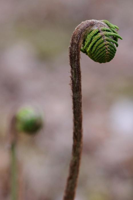 Random Curly Moss Thingy -- Sunainosato -- Otsu, Shiga, Japan -- Copyright 2010 Jeffrey Friedl, http://regex.info/blog/