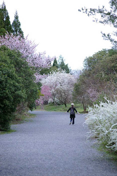 Heading Back to the Car through an area filled with many cherry-blossoms varieties -- Sunainosato -- Otsu, Shiga, Japan -- Copyright 2010 Jeffrey Friedl, http://regex.info/blog/