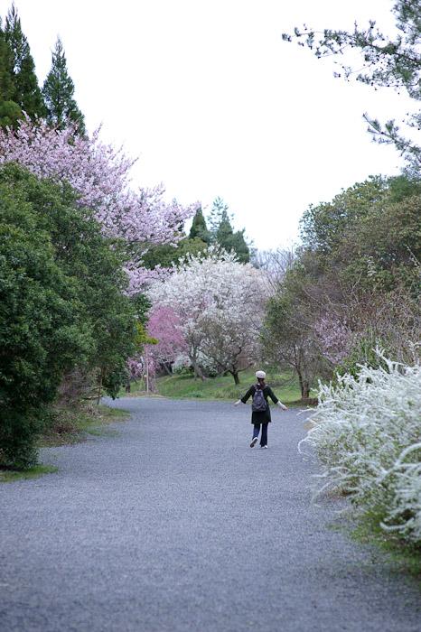 Heading Back to the Car through an area filled with many cherry-blossoms varieties -- Sunainosato -- Otsu, Shiga, Japan -- Copyright 2010 Jeffrey Friedl, http://regex.info/blog/