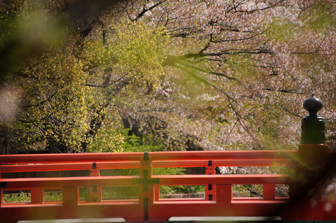 Bridge and Fading Blossoms with some way-out-of-focus leaves in the foreground that either annoy you, or add a nice sense of creaminess -- Kyoto, Japan -- Copyright 2010 Jeffrey Friedl, http://regex.info/blog/