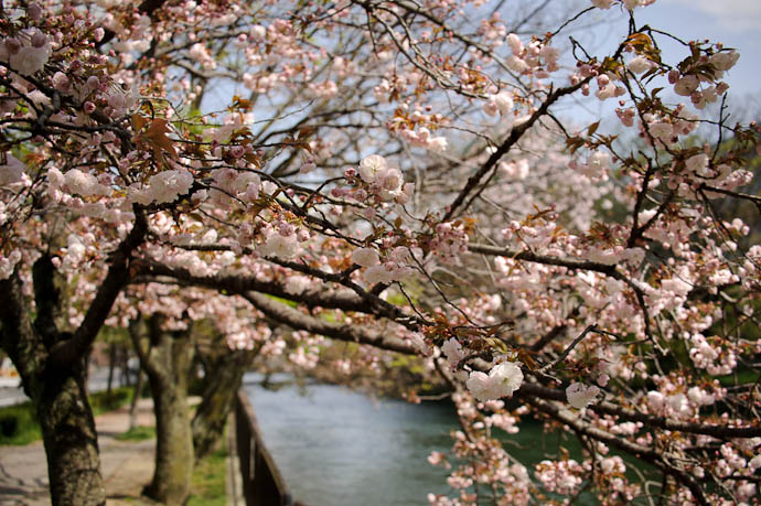 """Dreamy Bokeh on the """" 10 Gallons of Blossoms """" tree -- Kyoto, Japan -- Copyright 2010 Jeffrey Friedl, http://regex.info/blog/"""
