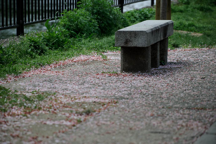 Carpet of Petals -- Kyoto, Japan -- Copyright 2010 Jeffrey Friedl, http://regex.info/blog/