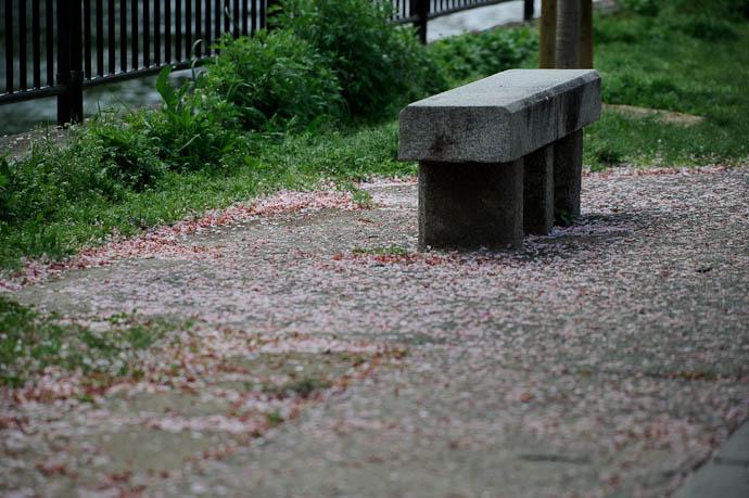 Carpet of Petals -- Kyoto, Japan -- Copyright 2010 Jeffrey Friedl, http://regex.info/blog/
