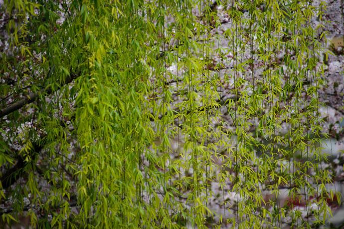 More Zones -- Kyoto, Japan -- Copyright 2010 Jeffrey Friedl, http://regex.info/blog/