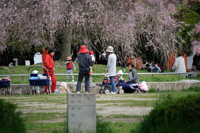 "Daycare @ 500mm Goldilocks says ""Too close!"" -- Kyoto, Japan -- Copyright 2010 Jeffrey Friedl, http://regex.info/blog/"