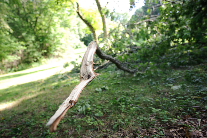 Collateral Damage limb from a too-near Oak that took a four-foot long strip of tree with it -- Rootstown, OH, USA -- Copyright 2010 Jeffrey Friedl, http://regex.info/blog/