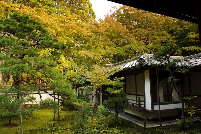 Garden and Tea House -- Koutou-in Temple (高桐院) -- Kyoto, Japan -- Copyright 2010 Jeffrey Friedl, http://regex.info/blog/
