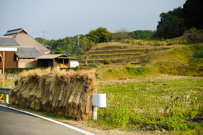 Drying Rice at the Side of the Road Iga City, Mie Prefecture, Japan — Nov 2010 -- Iga, Mie, Japan -- Copyright 2010 Jeffrey Friedl, http://regex.info/blog/ -- This photo is licensed to the public under the Creative Commons Attribution-NonCommercial 4.0 International License http://creativecommons.org/licenses/by-nc/4.0/ (non-commercial use is freely allowed if proper attribution is given, including a link back to this page on http://regex.info/ when used online)