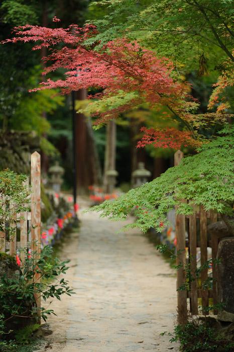 Start of a Very Long Path 300 meters of sorrow and anguish await -- Kongourinji Temple (金剛輪寺) -- Aisho, Shiga, Japan -- Copyright 2010 Jeffrey Friedl, http://regex.info/blog/