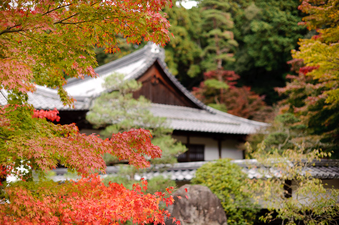 desktop background image of a mini garden on the way to the main garden of the Kongourinji Temple in Shiga, Japan -- I Love These Duo-tone Leaves -- Kongourinji Temple (金剛輪寺) -- Aisho, Shiga, Japan -- Copyright 2010 Jeffrey Friedl, http://regex.info/blog/