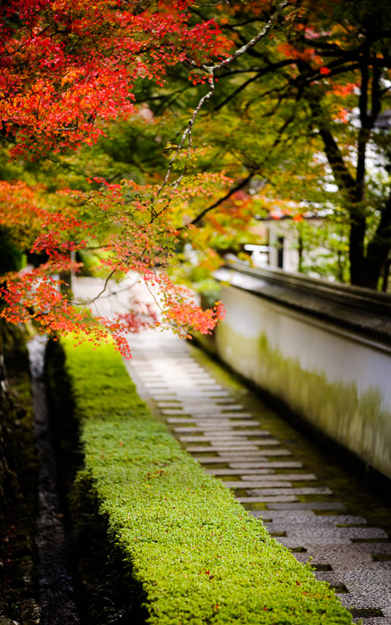 desktop background image of a path at the Yoshiminedera Temple (善峯寺), Kyoto Japan  --  Simple Path Yoshiminedera Temple (善峯寺), Kyoto Japan  --  Yoshiminedera Temple (善峯寺)  --  Copyright 2010 Jeffrey Friedl, http://regex.info/blog/