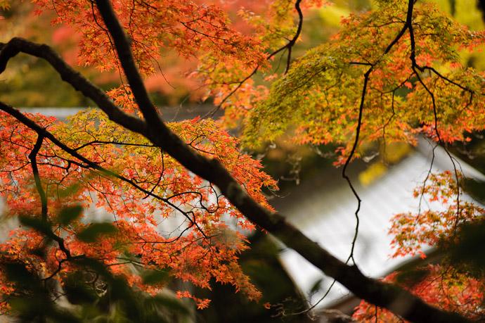 Temple on Fire autumn colors at the Konzou Temple, Kyoto Japan -- Konzou Temple (金蔵寺) -- Copyright 2010 Jeffrey Friedl, http://regex.info/blog/
