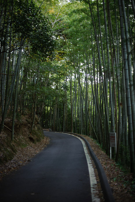 Bamboo Grove -- Kyoto, Japan -- Copyright 2010 Jeffrey Friedl, http://regex.info/blog/