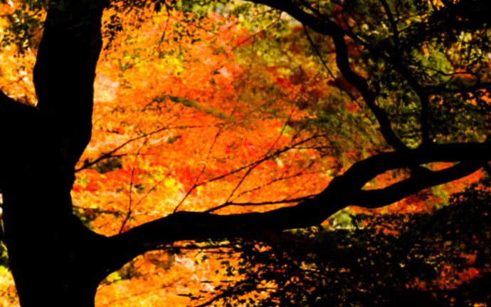 desktop background image of a colorful fall-foliage scene at the Eikando Temple (永観堂), Kyoto Japan  --  High Dynamic Range Eikando Temple (永観堂)  --  Eikando Temple (永観堂)  --  Copyright 2010 Jeffrey Friedl, http://regex.info/blog/  --  This photo is licensed to the public under the Creative Commons Attribution-NonCommercial 3.0 Unported License http://creativecommons.org/licenses/by-nc/3.0/ (non-commercial use is freely allowed if proper attribution is given, including a link back to this page on http://regex.info/ when used online)