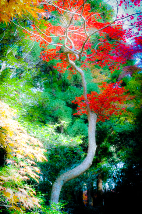 a fall-foliage sceen at the Eikando Temple, Kyoto Japan, with post-processing to create a strong, artsy vibe