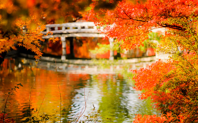 desktop background image of a colorful fall-foliage scene at the Eikando Temple (永観堂), Kyoto Japan  --  Temple's Lake at the Eikando Temple (永観堂), Kyoto Japan  --  Eikando Temple (永観堂)  --  Copyright 2010 Jeffrey Friedl, http://regex.info/blog/