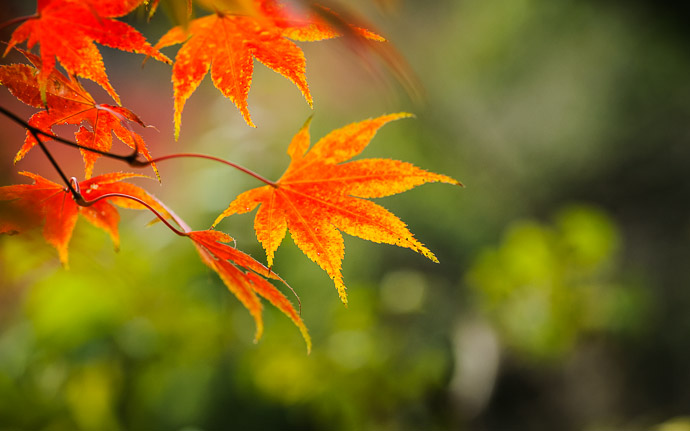 desktop background image of a colorful fall-foliage scene at the Eikando Temple (永観堂), Kyoto Japan  --  Classic Momiji Shot Eikando Temple (永観堂)  --  Eikando Temple (永観堂)  --  Copyright 2010 Jeffrey Friedl, http://regex.info/blog/