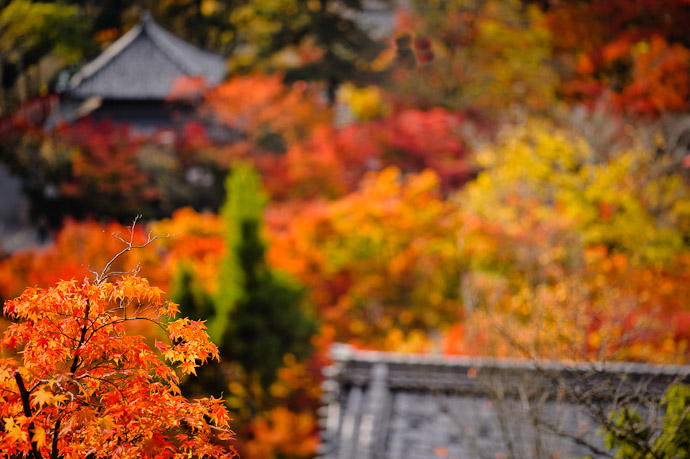 an autumn scene at the Eikando Temple (永観堂) in Kyoto Japan