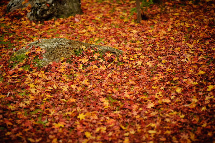 "desktop background image of a carpet of leaves at the Koutou-in Temple, Kyoto Japan -- Your Standard ""Carpet of Leaves"" Shot Koutou-in Temple, Kyoto Japan -- Koutouin Temple (高桐院) -- Copyright 2010 Jeffrey Friedl, http://regex.info/blog/"