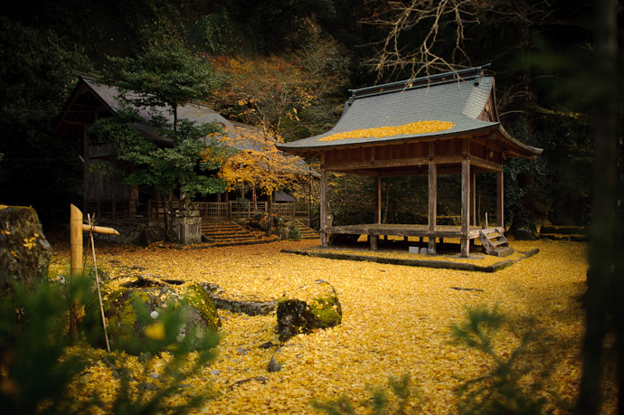 desktop background image of a carpet of yellow leaf at the Iwato Ochiba Shrine (岩戸落葉神社) in the mountains of north-west Kyoto, Japan -- Lots of Leaves -- Iwato Ochiba Shrine (岩戸落葉神社) -- Copyright 2010 Jeffrey Friedl, http://regex.info/blog/