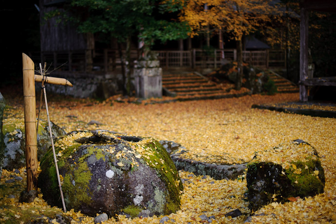 desktop background image of a carpet of yellow leaf at the Iwato Ochiba Shrine (岩戸落葉神社) in the mountains of north-west Kyoto, Japan -- Drip Fountain -- Iwato Ochiba Shrine (岩戸落葉神社) -- Copyright 2010 Jeffrey Friedl, http://regex.info/blog/