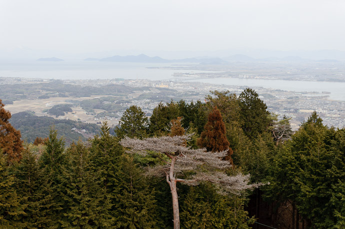 Lake Biwa and Weird Tree -- Hieizan Driveway -- Shiga, Japan -- Copyright 2011 Jeffrey Friedl, http://regex.info/blog/