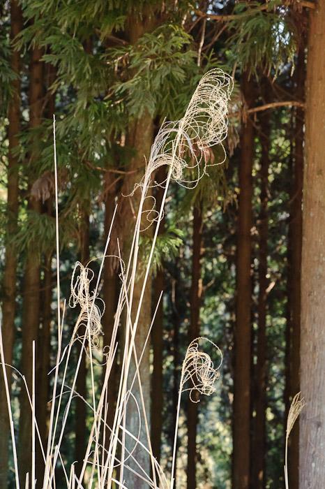 Curly -- Toufuu Shrine (道風神社) -- Kyoto, Japan -- Copyright 2011 Jeffrey Friedl, http://regex.info/blog/