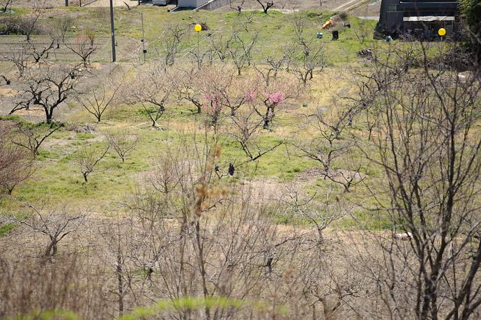 First Splash of Spring -- Sanyo Highway Seto Parking Area (山陽自動車道瀬戸パーキングエリア - 下り) -- Okayama, Japan -- Copyright 2011 Jeffrey Friedl, http://regex.info/blog/