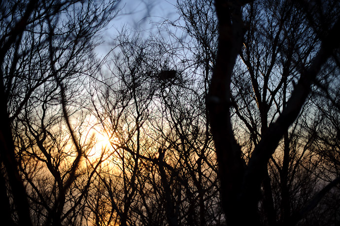Bird's Nest as Sunset -- Mt. Takanawa (高縄山) -- Matsuyama, Ehime, Japan -- Copyright 2011 Jeffrey Friedl, http://regex.info/blog/