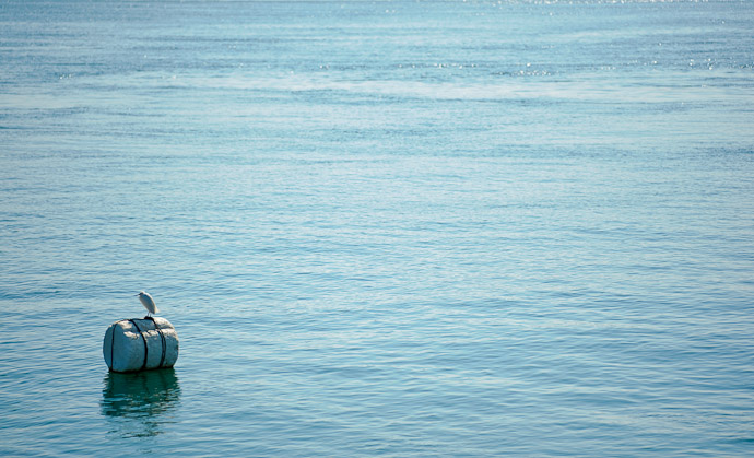 desktop background image of a lone white egret standing on a floating styrofoam buoy -- Just Chillaxin' -- Imabari, Ehime, Japan -- Copyright 2011 Jeffrey Friedl, http://regex.info/blog/