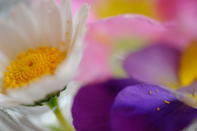 desktop background image of a small flower arrangement -- Imabari, Ehime, Japan -- Copyright 2011 Jeffrey Friedl, http://regex.info/blog/