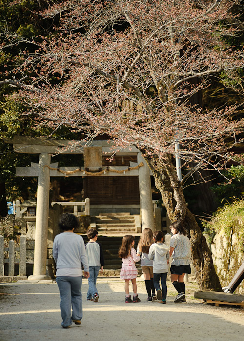 Entering the Shrine under a budding cherry tree -- Juge Shrine (樹下神社) -- Otsu, Shiga, Japan -- Copyright 2011 Jeffrey Friedl, http://regex.info/blog/