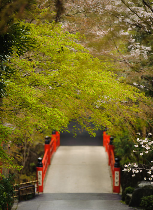 desktop background image of the bridge on the path leading to the Imakumano Kannoji Temple () in Kyoto, Japan, while the cherry blossoms are in bloom and the momiji maple are sporting spring-green leaves -- Path To the Imakumano Kannonji Temple () Kyoto Japan, Spring 2011 -- Imakumano Kannonji Temple () -- Copyright 2011 Jeffrey Friedl, http://regex.info/blog/