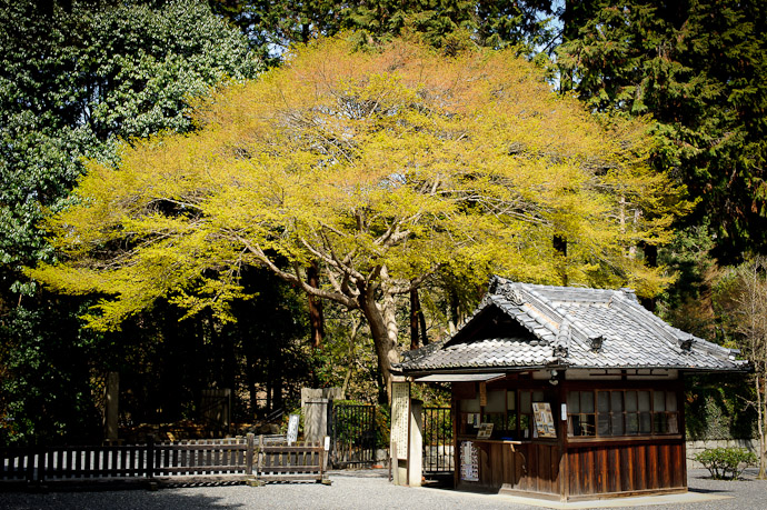 desktop background image of side entrance to the Sennyuji Temple (泉涌寺), Kyoto Japan, under an impressive maple -- Side Entrance Sennyuji Temple (泉涌寺) Kyoto Japan -- Sennyuji Temple (泉涌寺) -- Copyright 2011 Jeffrey Friedl, http://regex.info/blog/
