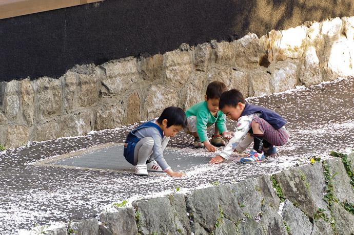 Big Piles o' Petals -- Kyoto, Japan -- Copyright 2011 Jeffrey Friedl, http://regex.info/blog/