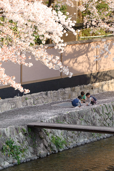 Foraging Under the Cherry Blossoms -- Kyoto, Japan -- Copyright 2011 Jeffrey Friedl, http://regex.info/blog/