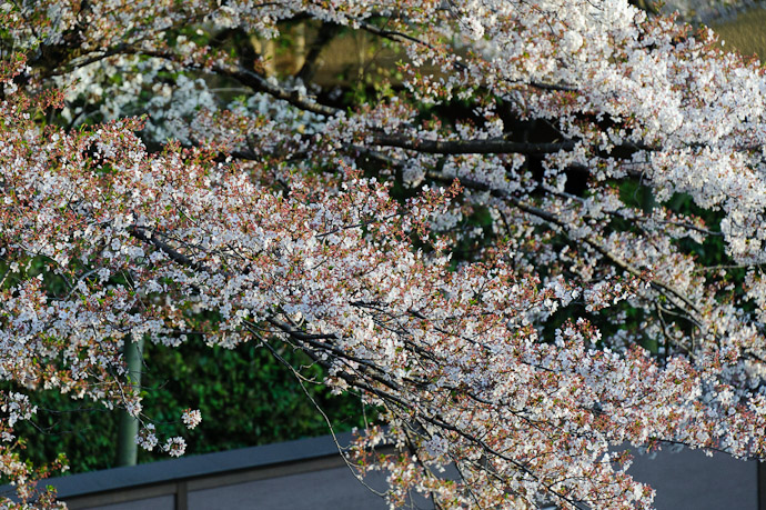 Somewhat Ratty Mixture -- Kyoto, Japan -- Copyright 2011 Jeffrey Friedl, http://regex.info/blog/