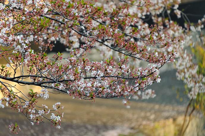 Kyoto, Japan -- Copyright 2011 Jeffrey Friedl, http://regex.info/blog/