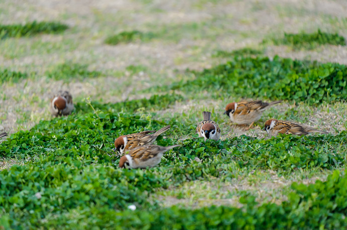 Late-Afternoon Snack -- Itami Sky Park -- Itami, Hyogo, Japan -- Copyright 2011 Jeffrey Friedl, http://regex.info/blog/